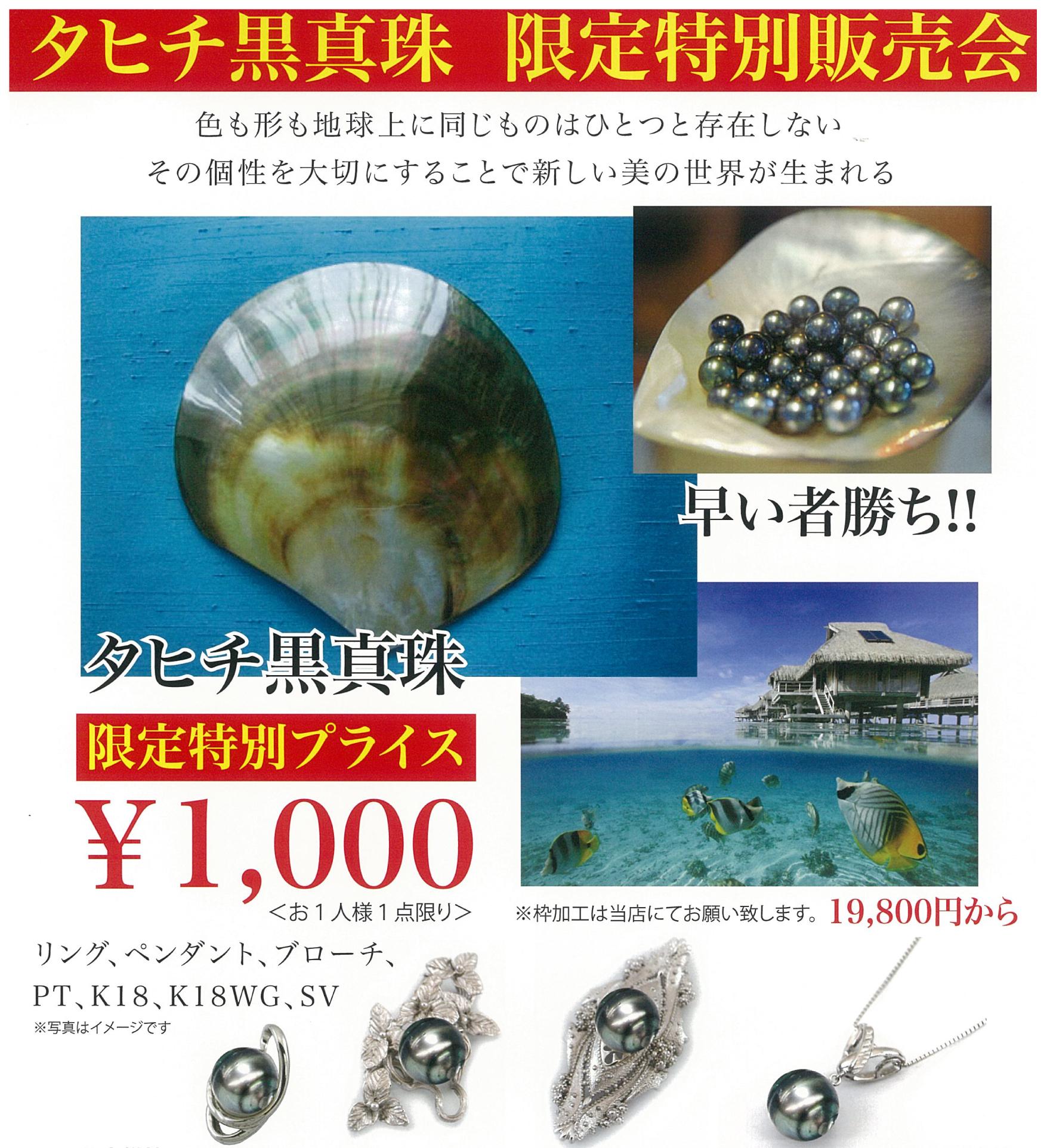 黒真珠.jpg